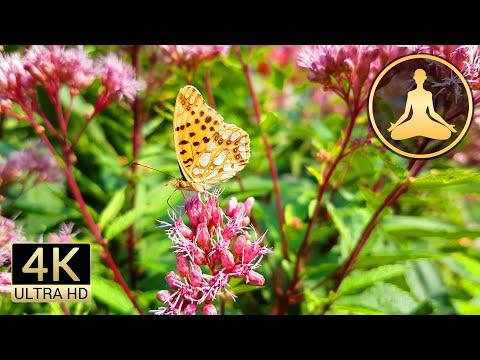 Virtual Garden (Flowers Butterflies Bees Birds) in 4K UHD