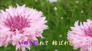 伍代夏子 - 矢車草 ~やぐるまそう~