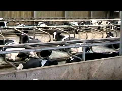 Why is factory farming such a big deal?