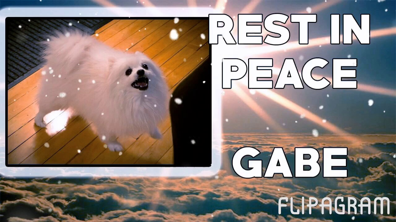 Download R.I.P gabe the dog/ tribute