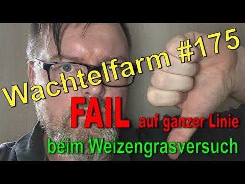 Fail auf ganzer Linie - Weizengras - Wachtelfarm #175