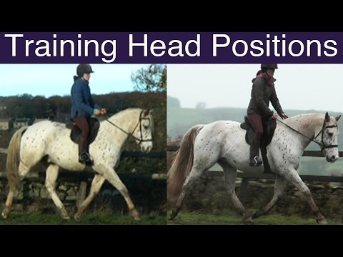 Longer and Lower - High and Collected: How to Train Head Positions