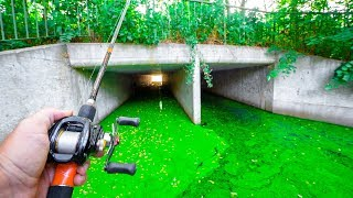 Fishing SECRET TUNNEL for URBAN SWAMP Fish!!! (Kicked Out)