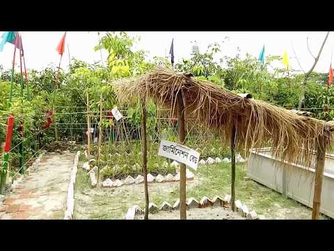 Largest Tree Fair | Dhaka Bangladesh | Brikkho Mela