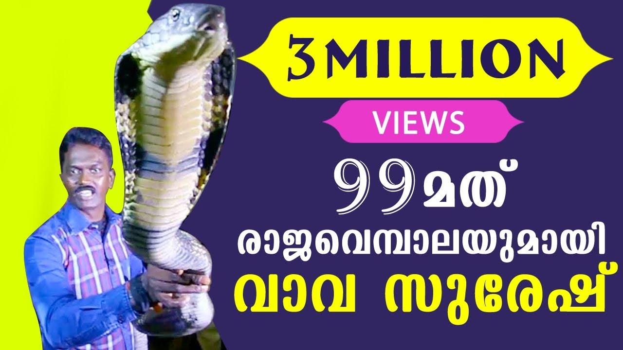 Vava Suresh Caught his 99TH King Cobra