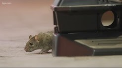Rodent control during COVID-19