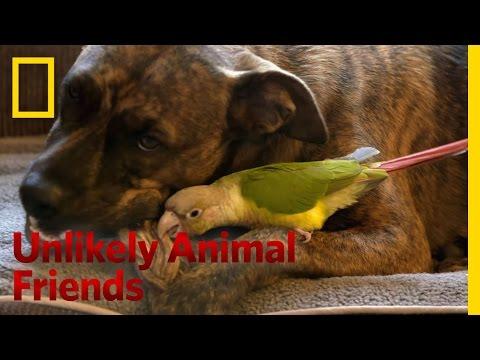 One Brave Bird   Unlikely Animal Friends