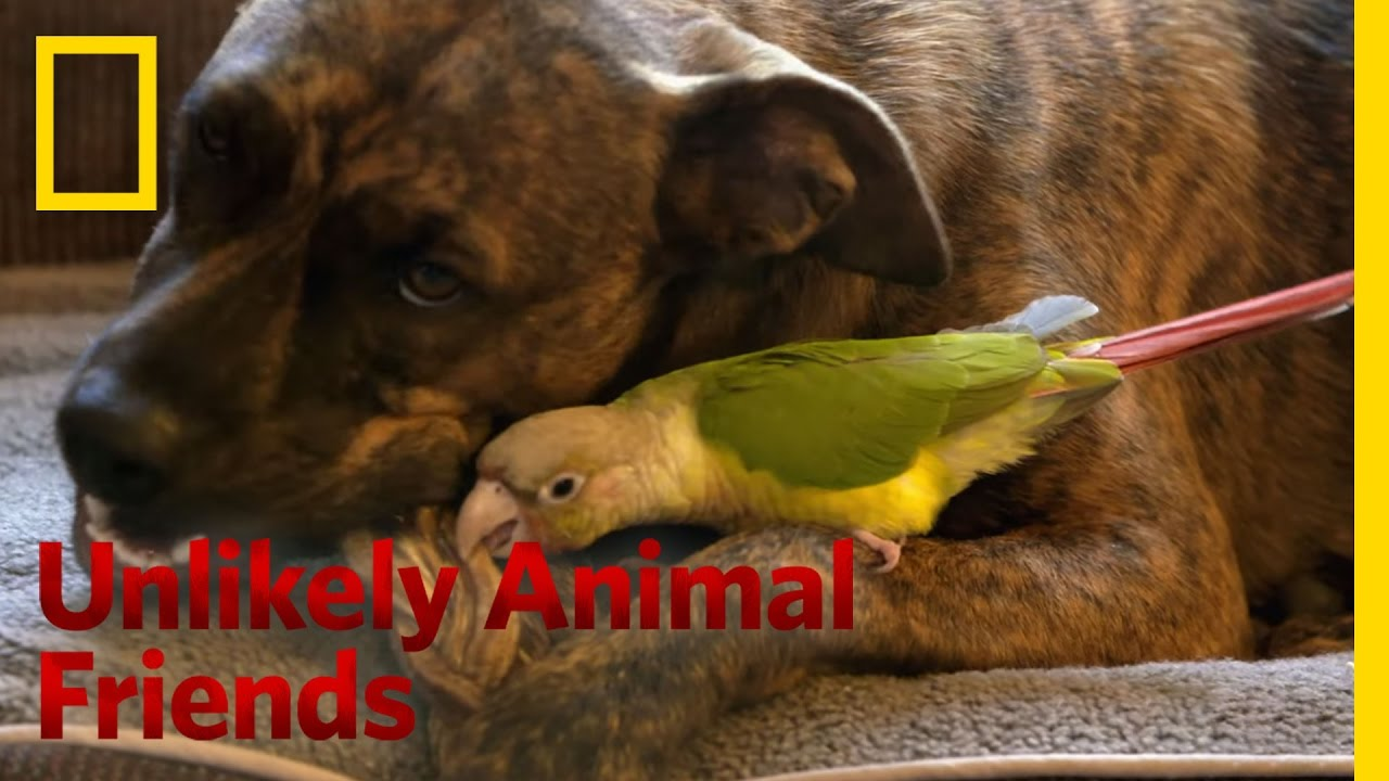 One Brave Bird Unlikely Animal Friends YouTube - 15 unlikely animal friendships will melt heart