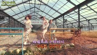 [中韓字幕] 풍뎅이 (聖甲蟲 Pungdeng-E) - 배추보쌈 (生菜包肉 Baechu Bossam )