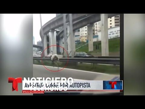 A la velocidad de una avestruz por una autopista