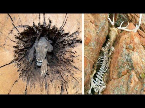 Животные, с Которыми Природа  Обошлась Несправедливо - Видео онлайн