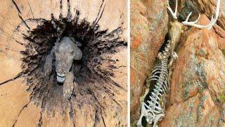 Животные, с Которыми Природа  Обошлась Несправедливо