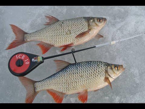 рыбалка зимой на что ловить красноперку