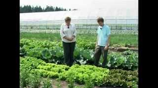 Сад и огород. Салат, базилик, шпинат
