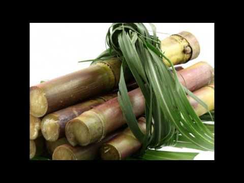 les bienfaits du jus de canne à sucre