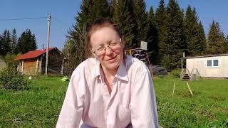Земляника из семян за 3 месяца на аэропонной установке Аэро Флора