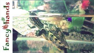 час из жизни черепахи за 5 мин