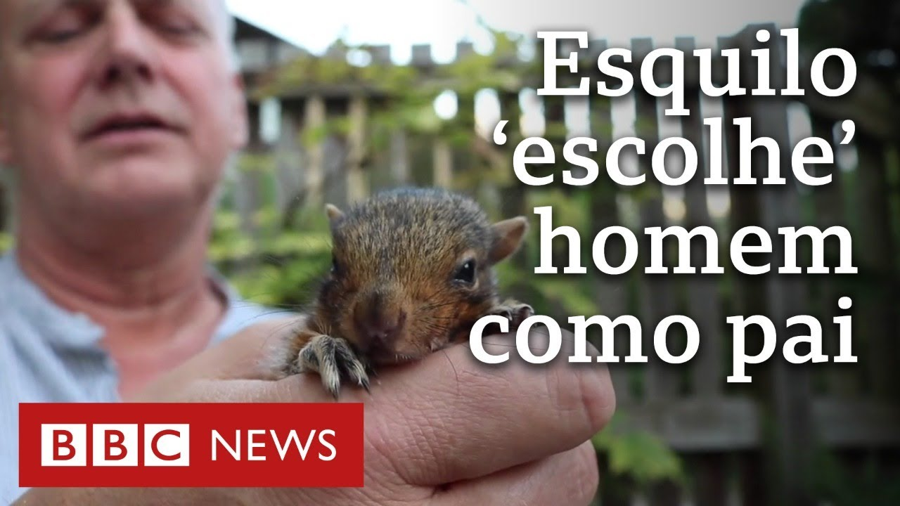Bebê esquilo abandonado se apega a cuidador como pai