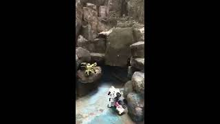Battle Bots Tobot R Vs Tobot D