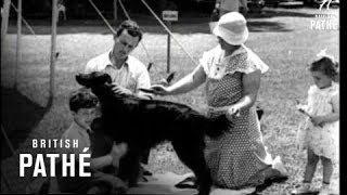 Canine Kings (1933)
