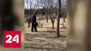 Стая бездомных кошек напала на пенсионера и его собаку - Россия 24