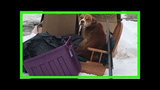| Dog Rescue StoriesDog Left Behind With Owners' Trash Huddles On Discarded Recliner For Warmth