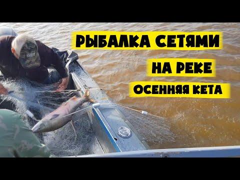 Рыбалка сетями на Амуре. Лов кеты. Красная рыба и икра!