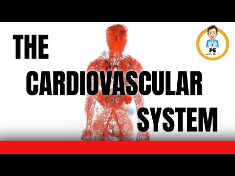 Learn the Cardiovascular System! Anatomy of the heart, blood vessels and blood