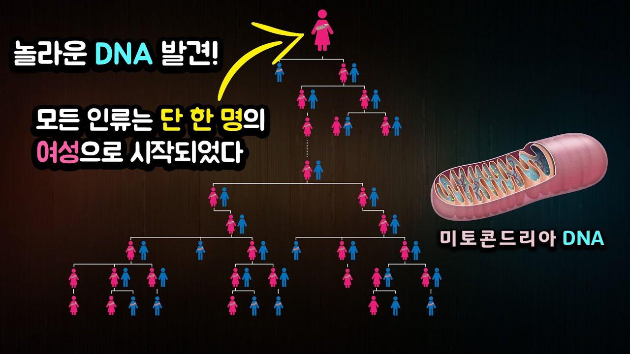 """""""미토콘드리아 DNA"""" 모든 인류는 단 한 명의여성으로 시작되었다 !!!!"""