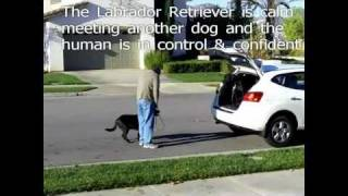 Dog Training Riverside Ca Behavior Aggression