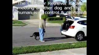 Dog Training Riverside Ca Behavior Aggression