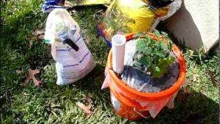 Survival Gardening In Containers