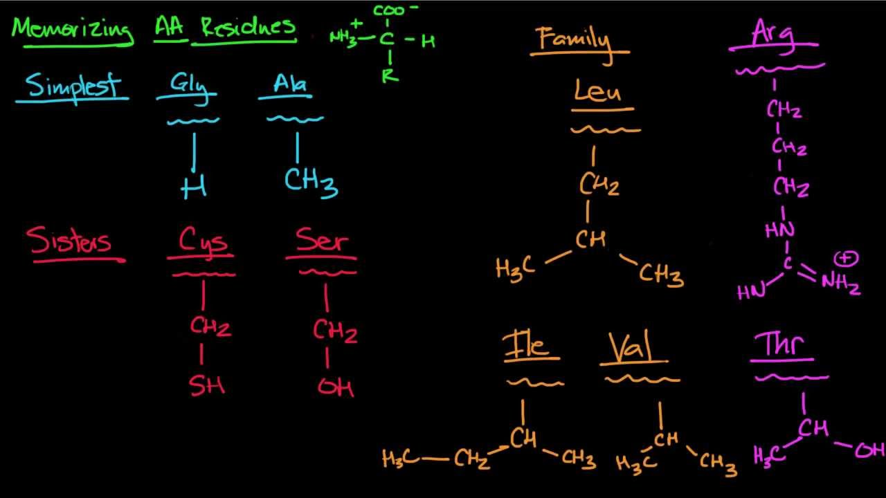 relationship between dna and protein molecules