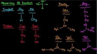 Memorizing Amino Acids Part 1
