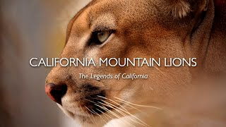 California Mountain Lions: The Legends of California