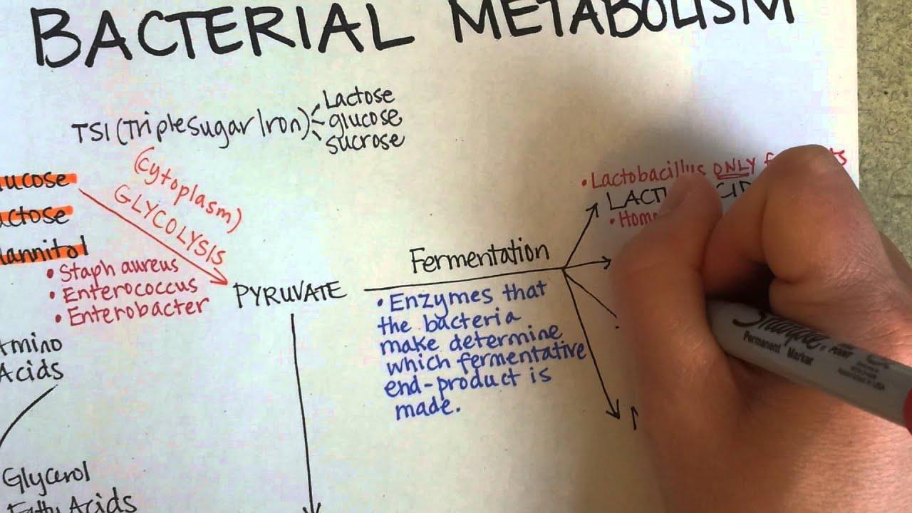 bacterial metabolism Metabolic wizardry: microbial metabolism – microbiology | lecturio - duration: 4:45 lecturio medical videos 3,585 views 4:45 loading more suggestions.