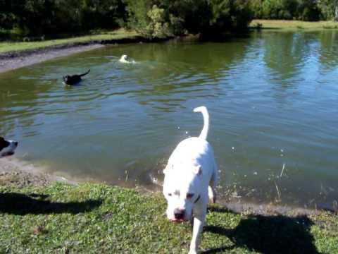 Deaf Dog Training off leash recall