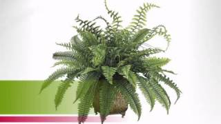 Ferns In Metal Planter - Artificialplantsandtrees.com