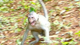 Terrible Bite baby ! Big Monkey warning Bite little baby seriously by no reason baby crying loudly