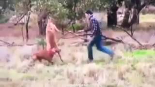 飼い犬がカンガルーに襲われている所を目撃。素早くワンちゃんを救出に...