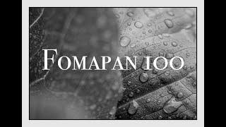 35mm Macro Photography w/Fomapan 100