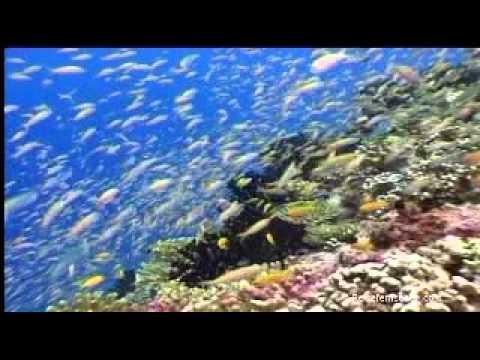 Seychellen: Tauchen / Seychelles: Diving powered by Reisefernsehen.com - Reisevideo / travel video
