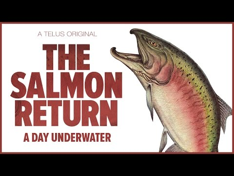 The Salmon Return – A Day Underwater