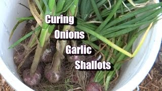 how to peel shallots