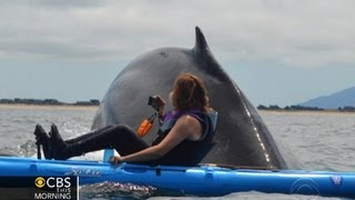Close encounter: Kayakers get rare look at humpbacks