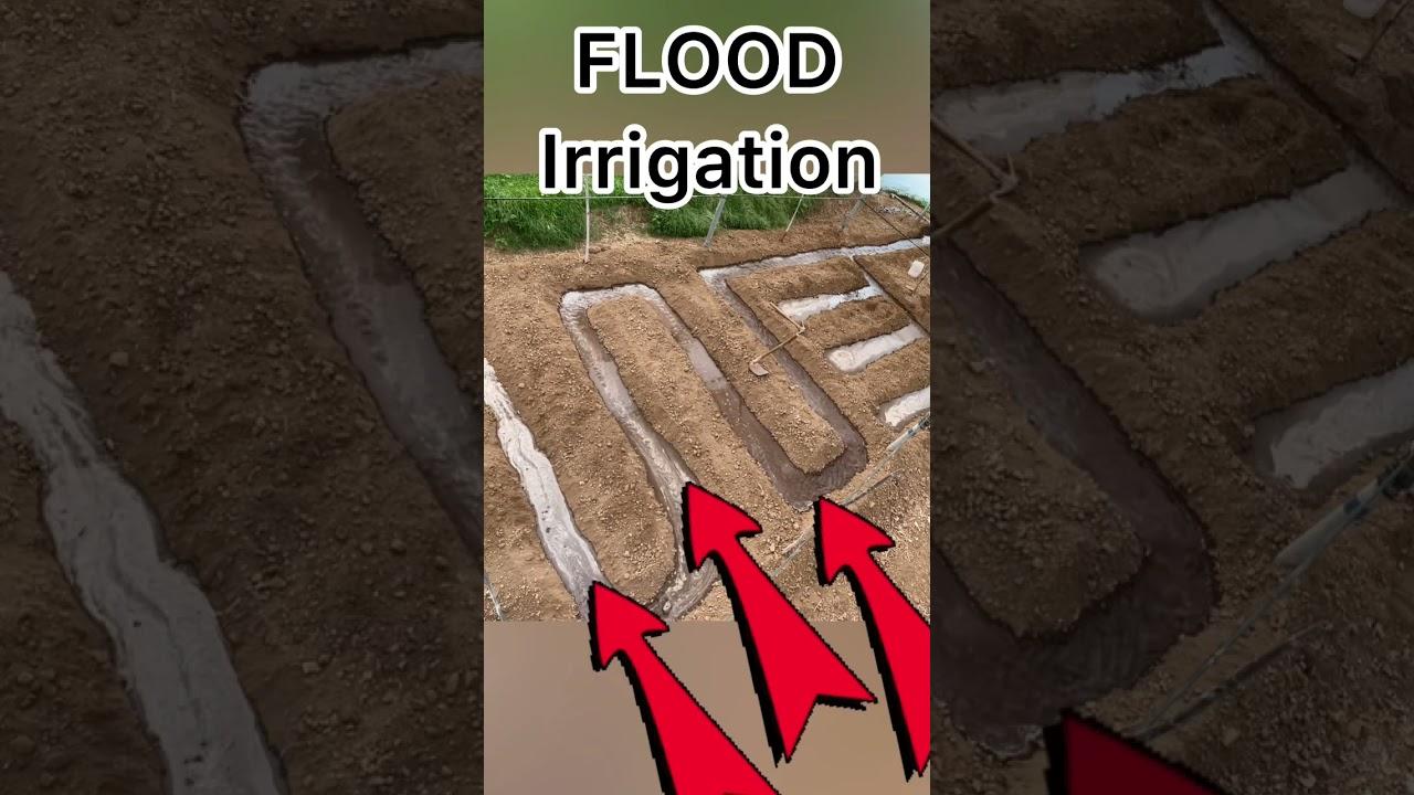 Chain Flood Irrigation System🌊💦#Shorts #indianfarmer