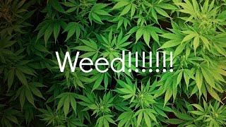 Pushing weed