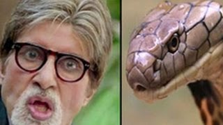 SPOTTED: Snake in Amitabh Bachchan's House!   Hot Latest News   Jalsa, Juhu