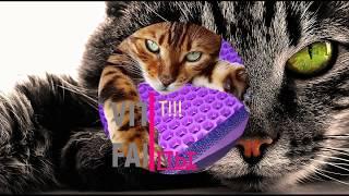 Двухслойный коврик//коврик для кошки //ЧИСТЫЕ ЛАПЫ //кошачий туалет