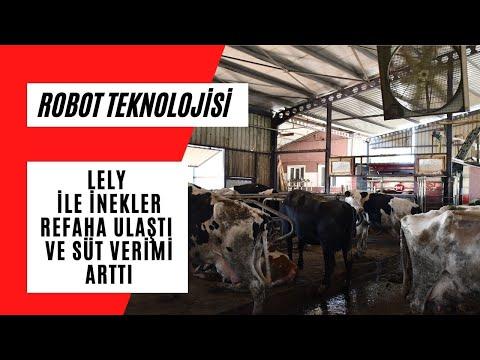 Lely ile inekler refaha ulaştı ve süt verimi arttı